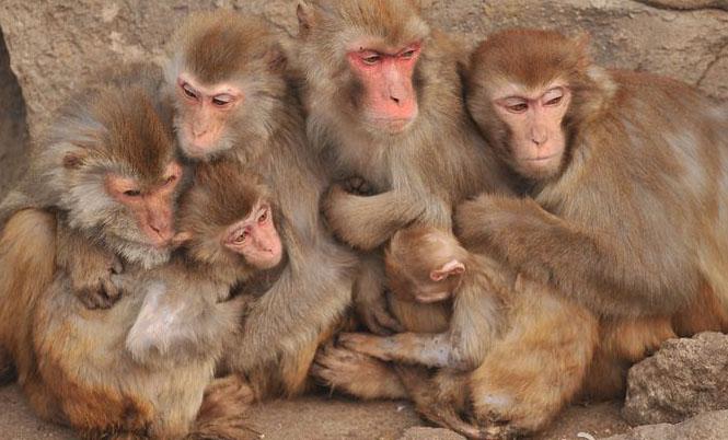 组图:青岛动物园猴子